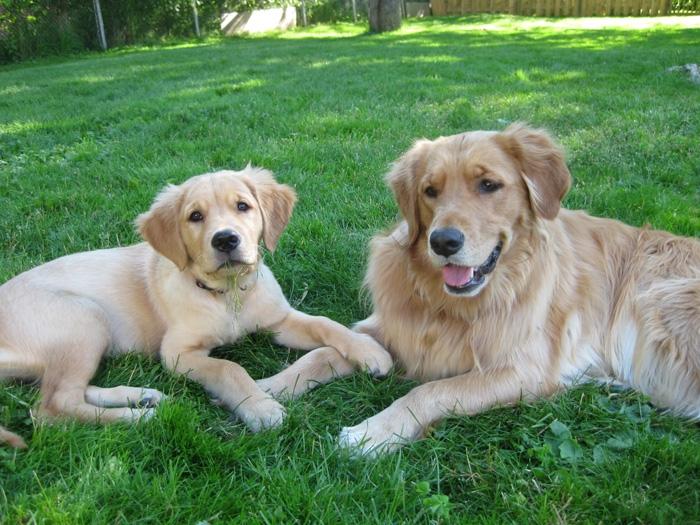 Annie & Gracie