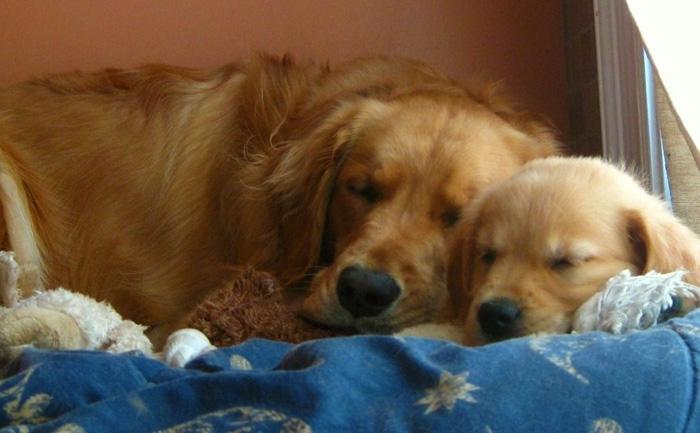Gracie & Annie