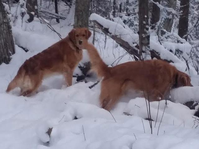 Peyton and Buster